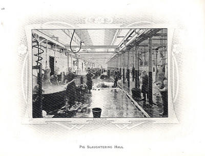 Pig Slaughtering Hall