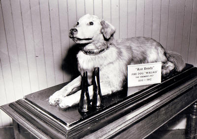 Wallace the Fire Dog (deceased)